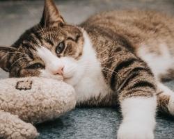 Päevakäpp: 20 kuud ootust — millal Hugo ükskord kodu leiab?